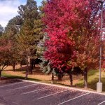 fall colors in the parking lot.