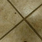 There were roaches all over a stall in the women's restroom! This is just a picture of a couple.
