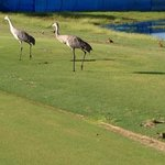 "Wildlife on the National course, and no, I did not get a ""Birdie"" on this hole."