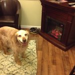 Our sweet dog Tucker loves the Garden Gate B&B! Particularly the warm fireplace!