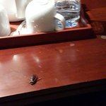 Big Size of  Cockroaches ( KARAPOTHTHOS) on room table