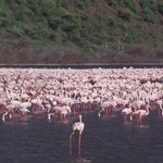 Foto de Lake Bogoria Spa Resort