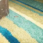 Bug strolling thru room, hard to see on dark carpet-how many were there???