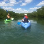 Kayaking through mangroves seeing dolphins and mantees.