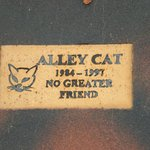 Alley Cat No Greater Friend