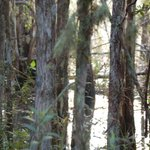 Six Mile Cypress Slough Preserve Foto