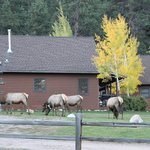 There were a bunch of female elk grazing on the property our whole trip