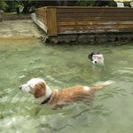 Family Pets Enjoying Swimming in our Beach