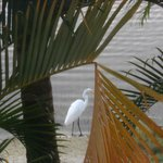 Photo de Marco Island Lakeside Inn