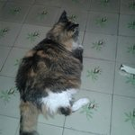 This fatty kitty:)