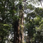 Special place in Malawi .... the rainforest