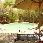 Bilde fra Makalali Private Game Lodge