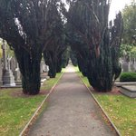 Pathway at Glasnevin.