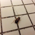 Close-up of Cockroach in shower at Buenos Aires Hotel Maspolamas