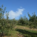 Small sliver of orchard