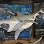 model of a Great White Shark