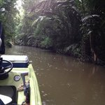 Jungle canal on the tour