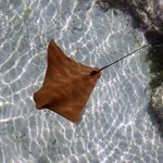 One of the outside pools - you can swim with the stingrays