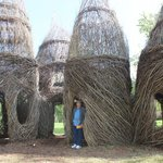 vine structures at Cheekwood