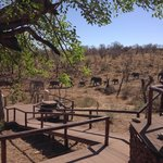 Royal Madikwe Luxury Safari Lodge Foto