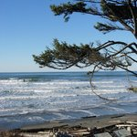 the wild Pacific coast at Kalaloch