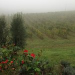 The fog in the morning settled on the Dievole vineyards