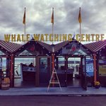 North sailing whale watching center