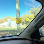 cattle crossing sign located between Residence Inn and Foxwoods