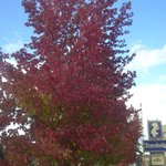 fall color outside