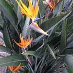Beautiful plantings including this bird of paradise