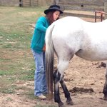 Bilde fra Red Horse Mountain Dude Ranch
