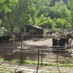 The Corral.