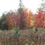 Beautiful fall colors outside your window in the back woods