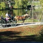 Complimentary Carriage Rides