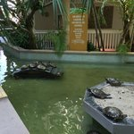 Turtles outside the main lobby
