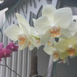 Garden - collection of orchids in full bloom