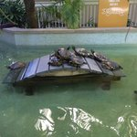 Turtles a big hit by the lobby.