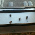 bugs between the panes of glass