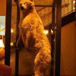 bear in the lobby