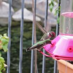 Hummingbirds feeding on the deck at the Yosemite Blue Butterfly Inn