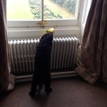 Our dog looking at the parterre with 'chicken'!!
