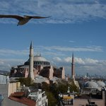Rooftop terrace view of the Haghis Sophia with a bonus of a bird flying by