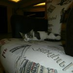 Hotel is full of cats!