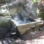 Old hot spring on hiking trail