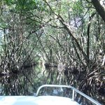 Mangrove Boat Tour -  November 2014