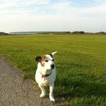 The very clean and well maintained dog field with great scenery..Doggy heaven..