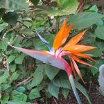 Bird of Paradise in the pool area