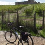 "Castle Valongo surrounded by a vineyard. Turaventur's ""Castles and Wine"" guided bicycle tour."