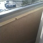 Lady Bug on Window Sill