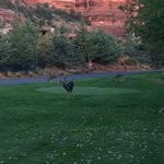 Deer on the Chipping Green